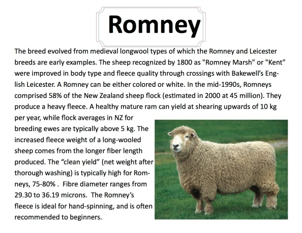 breed-info-romney