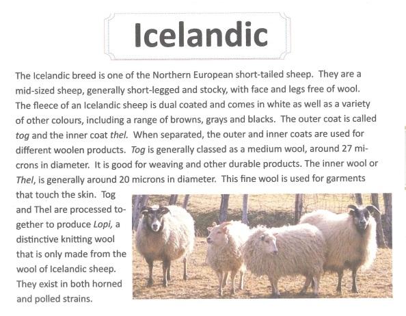 icelandic scan